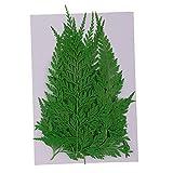 12pcs Gepresste Getrocknete Farnblätter Herbarium DIY Kunsthandwerk Sammelalbum Lesezeichen