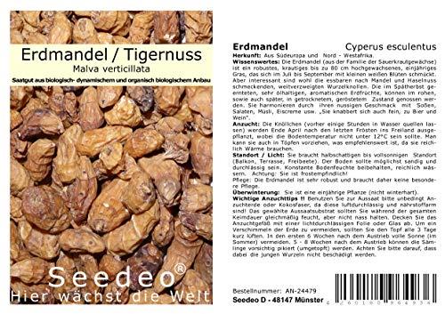 """Seedeo® Erdmandel """"Tigernuss Chufa"""" (Cyperus esculentus) 10 Samen BIO"""