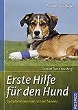 Erste Hilfe für den Hund: Symptome erkennen, schnell handeln