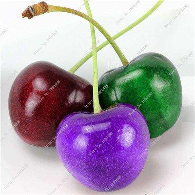 Multi Color Cerise Fruit Graines De Fleurs vivaces Jardin Plantes en pot Heirloom fruit délicieux croissance naturelle 10 particules 7