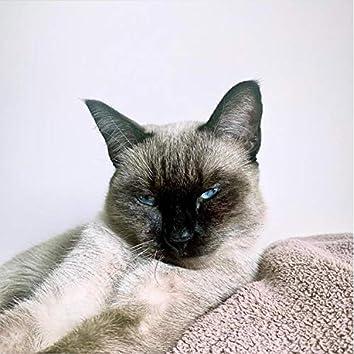 Nankör Kedi
