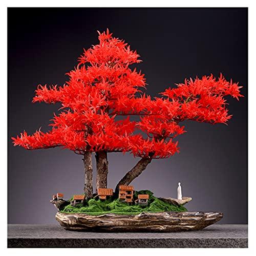 Hong Yi Fei-Shop Bonsai Pflanze...