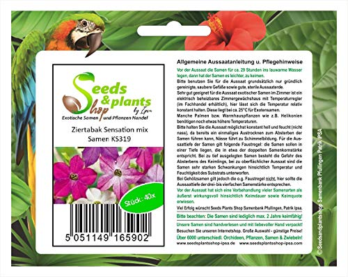 Stk - 40x Ziertabak Sensation mix-Ziertabak Flügeltabak Samen Pflanze KS319 - Seeds Plants Shop Samenbank Pfullingen Patrik Ipsa