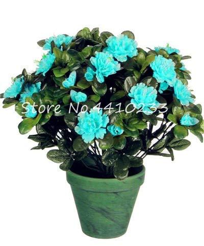 Generic Fresh 100 Stück Rhododendron Azalea Blumensamen zum Pflanzen von Grün 1
