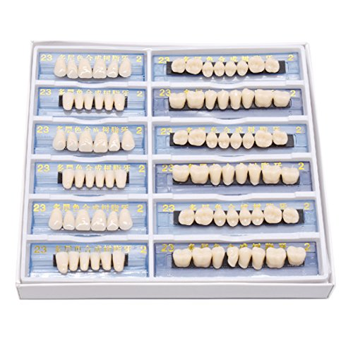 Angzhili 168pcs/set Dental Complete Acrylic Resin Denture Dental Teeth Upper+Lower Shade 23 A2 Oral Care Whitening Tooth Model Dental Materials