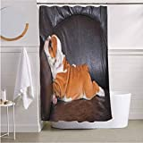 ScottDecor English Bulldog Waterproof Shower Curtain Liner Puppy Resting on a Sofa Funny Animal Photography Cute Canine for Bathroom Showers, Stalls and Bathtubs Seal Brown White Brown W72 x L78 Inch