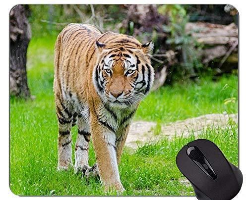 Yanteng Cojín de ratón de Tigre Brillante Fresco, Alfombrillas de ratón Animales con Bordes cosidos