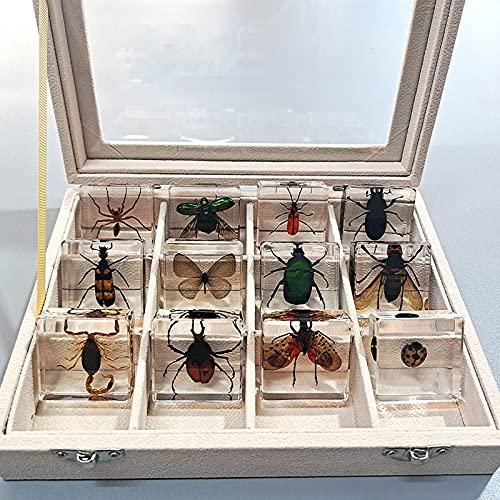 Muestras de resina de insectos reales,exquisito juego de regalo de muestras de animales,espécimen de taxidermia de pisapapeles de insectos gigantes reales,espécimen de escarabajo,educación científica