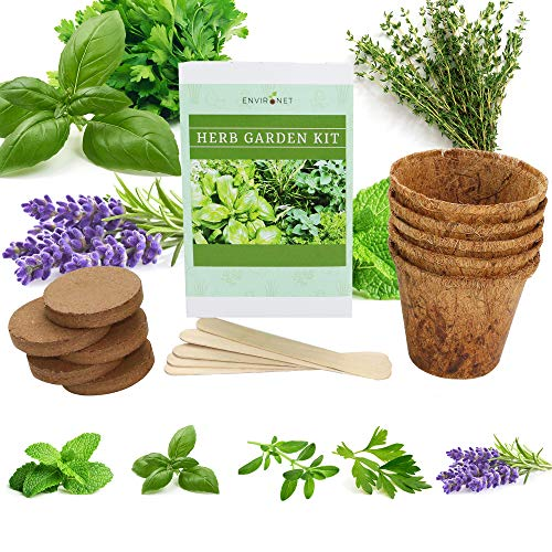 Environet Herb Garden Kit. Seed Starter Kit Indoor. Grow 5 Different Herbs - Basil, Mint, Parsley, Thyme and Lavender from Seeds at Home. Gardening and Home Decoration Gifts