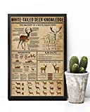 HolyShirts White-Tailed Deer Knowledge The Anatomy of a White-Tailed Deer Poster (24' x 36')