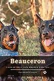 Beauceron: Choose best dog breeds for you