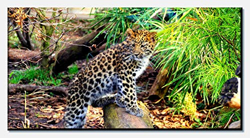wandmotiv24 Cuadro de Lienzo Pequeño Leopardo 100x50cm (Ancho x Alto) Panoramabild Fotoleinwand Art Prints Canvas Art Photo Regalos Regalos Holzrahmen einteilig
