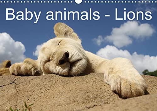 Baby Animals – Lions (Wall Calendar 2022 DIN A3 Landscape)