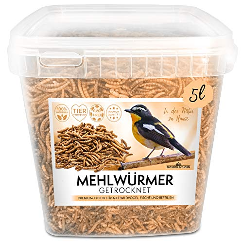 Blossom&Thorn Mehlwürmer getrocknet 5 Liter Eimer│ Protein Snack für Vögel, Fische, Reptilien u.v.m.
