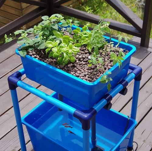 小型 アクアポニックス 水耕栽培 キット オーバーフロー 水槽/さかな畑 【ブルー】