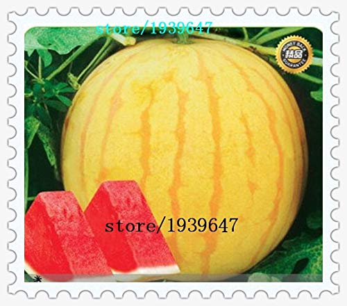 AGROBITS Heirloom39 ; Huang Pi Qiu39 ; Jaune Peau Rouge Seedless Watermelon Seeds, 20 graines/Lot, 13% Sugar Sweet Juicy : Mix