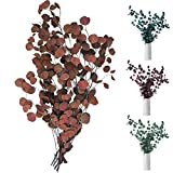 Sporgo - Fiori secchi in eucalipto essiccati per fiori secchi di alta qualità, pura pianta naturale, foglie tonde e fresche, per feste