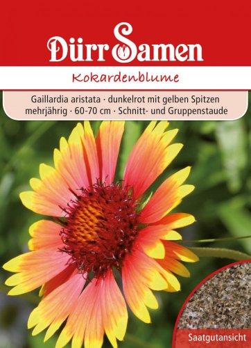 Dürr-Samen Kokardenblume