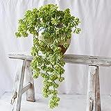GerFogoo - Planta suculenta artificial sin maceta, púas colgantes de perlas falsas cactus, cactus, planta de cactus, decoración para el hogar, interior, jardín de hadas (blanco)
