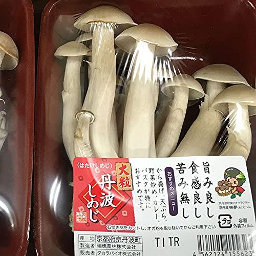 京都府産 京丹波 大粒丹波しめじ(ハタケシメジ) 1パック(100g)×20入り/箱