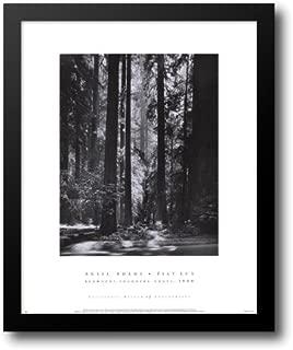 Redwoods, Founders Grove 20x24 Framed Art Print by Adams, Ansel