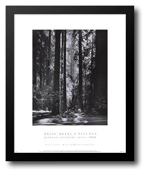 Redwoods Founders Grove 20x24 Framed Art Print by Adams Ansel