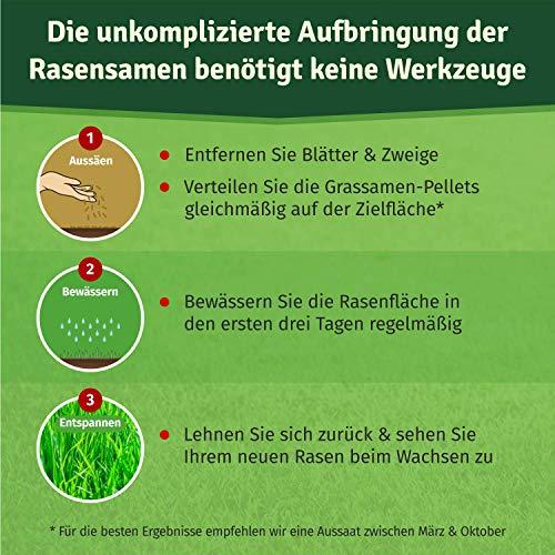 Veddelholzer Rasenpellets Regeneration Rasen - Rasensamen für robusten und widerstandsfähigen Rasen - Grassamen zur Einsaat u Nachsaat Samen Schattenrasen schnellkeimend