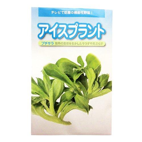 葉菜類 種 アイスプラントプチサラ コート60粒