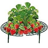 Unbekannt VARILANDO® Reifer für Erdbeeren im 5er-Set Erdbeer-Reifer aus Kunststoff Frucht-Reifer