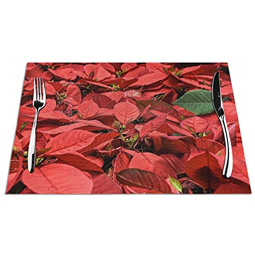 Uliykon Table Mats Set of 4,Poinsettia Christmas Flower Place Mats Table Placemats Washable Non-slip Heat Insulation Woven Vinyl for Kitchen Dinning Restaurant 18'X12'