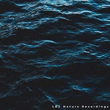 Ocean Sounds Vol. 4