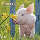 Piglets 2020 7 x 7 Inch Monthly Mini Wall Calendar, Domestic Pet Baby Farm Animals