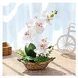 miaoyu Flores artificiales con maceta de orquídeas artificiales con doble tenedor, bonsái, flores falsas para decoración del hogar/jardín, plantas falsas (color: BsSChudielan, tamaño: XL)