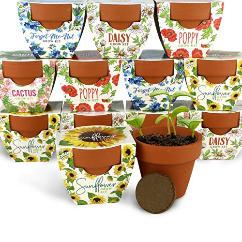 Terracotta Mini Grow Pots