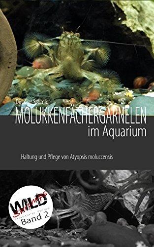 Molukkenfächergarnelen im Aquarium: Haltung und Pflege von Atyopsis moluccensis (WILD SHRIMPS Fächergarnelen 2)