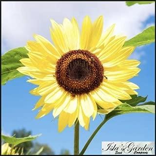 Lemon Queen Sunflower Flower Seeds, 55+ Premium Heirloom Seeds, Beautiful Bright Yellow & Wonderful Addition to Your Garden! (Isla's Garden Seeds), 85-90% Germination Rates, Highest Quality Seeds