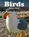 Birds Photography Photo Book   V113