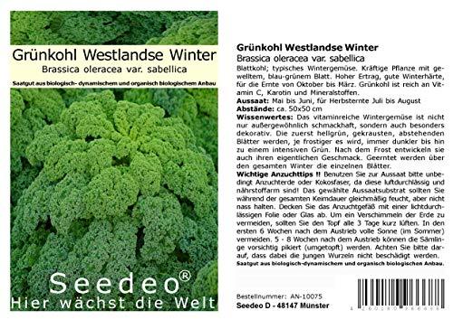 Seedeo® Grünkohl Westlandse Winter (Brassica oleracea var. sabellica) BIO 150 Samen