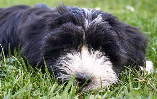 Mein Hund hat KLICK gehabt.: Hundeschule, gewaltfrei mit dem KLICKER Training.
