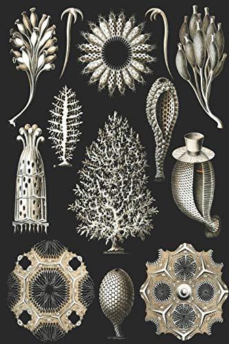 Haeckel scientific biological art notebook: Vintage Science Illustrations N°05 from