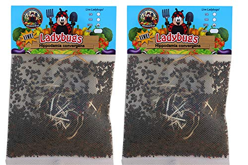 Nature's Good Guys 3000 Live Ladybugs - (2 X 1500 Live Ladybugs) - Guaranteed Live Delivery!
