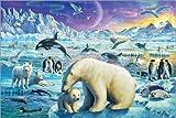 Poster 91 x 61 cm: Nacht in der Arktis von Adrian