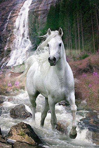 GB eye Ltd Pferde Poster Schimmel, unbeschichtet, Mehrfarbig, 2