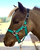 Star Point Horsemanship Mini-Pony Leather Crown Stable Halter (Purple, Large Mini-Pony 34-40')