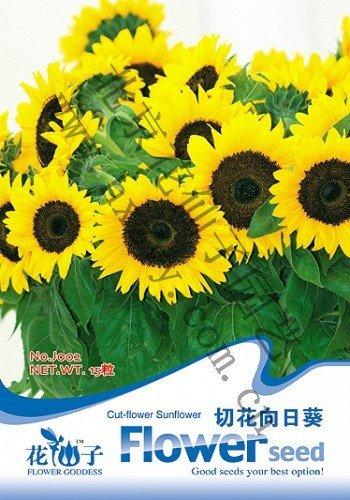 Ornementaux graines de fleurs de tournesol, cut-fleur de tournesol, graines de tournesol Couper, environ 20 particules