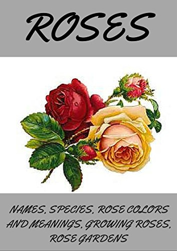 Roses Roses How To Grow Roses Planting Roses Rose Spices Types
