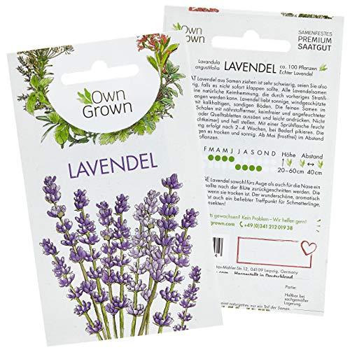 Lavendel Samen: Premium Lavendelsamen für ca. 50 duftende Lavendel Pflanzen – Lavendel Pflanze Samen, Mehrjährig und Winterhart – Garten- und Balkonpflanzen Winterhart, Blumensamen Balkon von OwnGrown