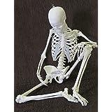 1/2サイズ全可動スーパーフレキシブル女性全身骨格模型