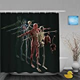 Cortina de baño Repelente al Agua,Anatomía Humana Vista Explotada Deconstruido Músculos Óseos Separados Órganos Nerviosos,Cortinas de baño de poliéster de diseño 3D con 12 Ganchos