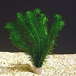 top oxygenating pond plants waterweed
